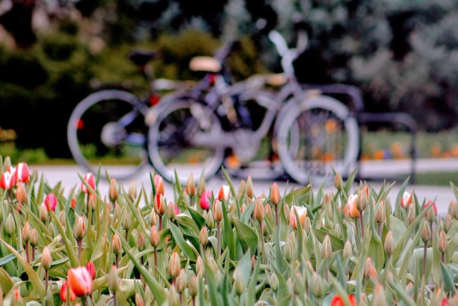 Private Full-Day Tulip Trip and Bike Tour from Amsterdam