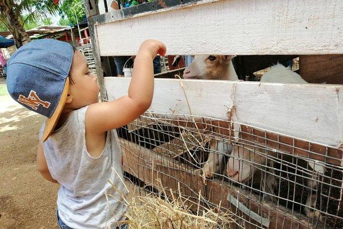 Half Day Tour: Ponylandia - Farm for Kids