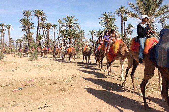 Quad Bike with Camel Riding