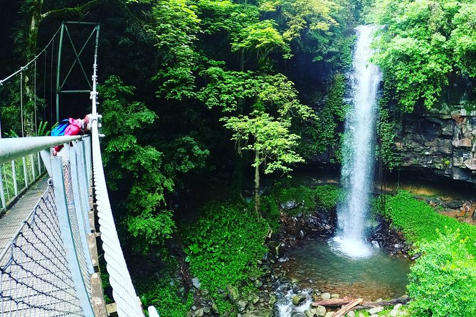 Rainforest & Waterfall Experience