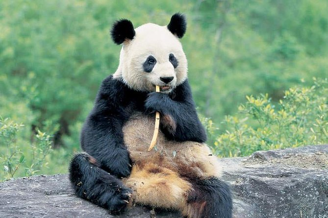 Best of Chengdu: Panda Visit and Cooking Class Experience
