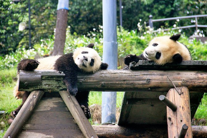 One Day Trip to Panda Base and Dujiangyan Irrigation Project
