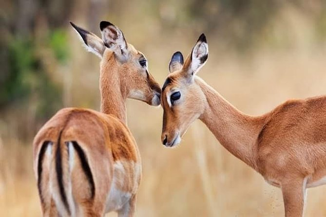 1 Day tour of Lake Nakuru National Park