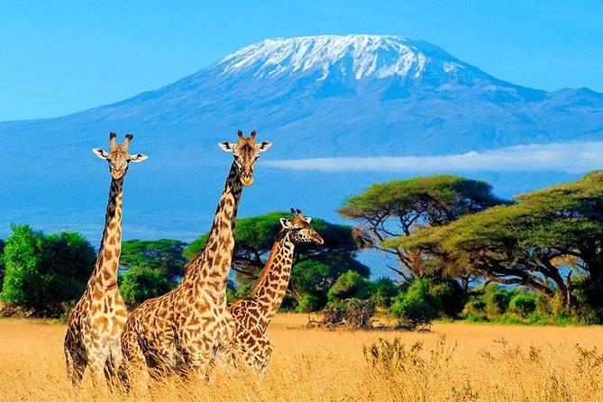 3 Day Samburu Safari