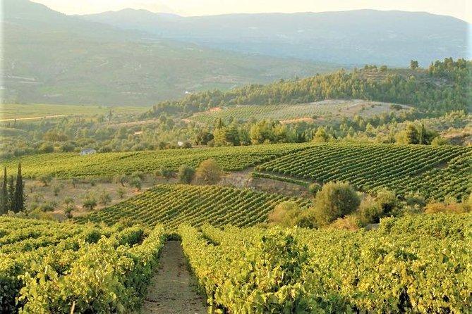 4. Wine Tasting: The ambassador grape varieties of Greece