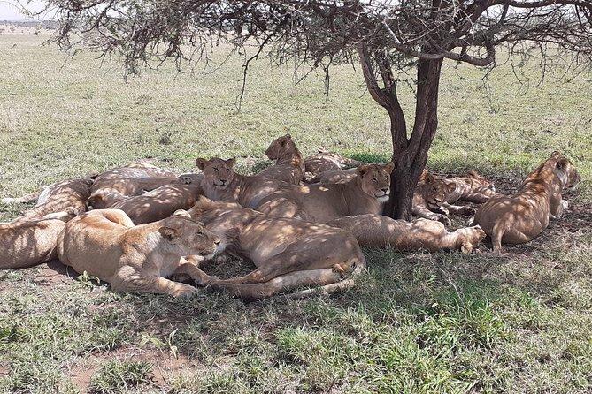 3Days/ 2Nights - Unforgettable Safari Experience