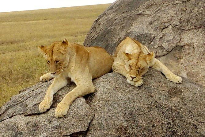 African Tours & Safaris Holidays