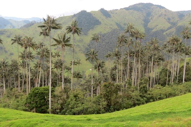 A day in the Cocora Valley with the coffee farm