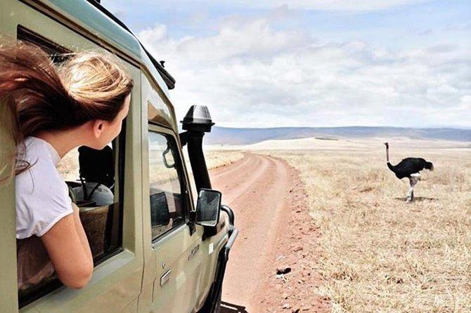 Serengeti Safari and Mount Kilimanjaro from Arusha
