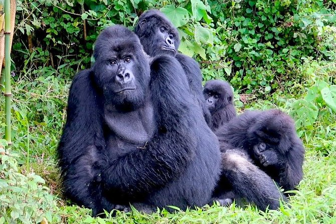 9 Days Gorilla Trekking, Wildlife and Bird Watching Safari