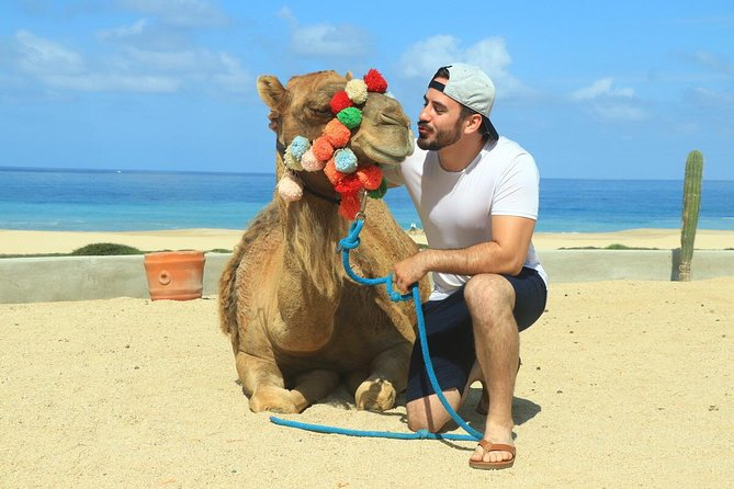 Camel Ride Adventure in Cabo