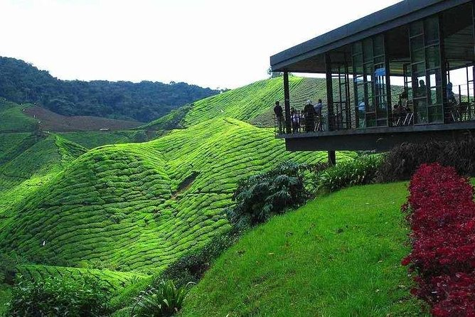 Full Day Cameron Highlands and Batu Caves Tour from Kuala Lumpur