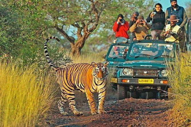 Explore Wildlife-Ranthambore Canter Safari-Indian National