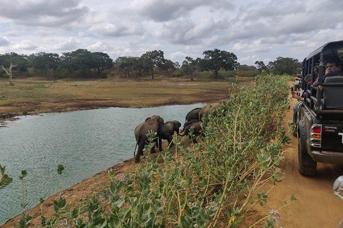 Yala National Park Safari from Unawatuna