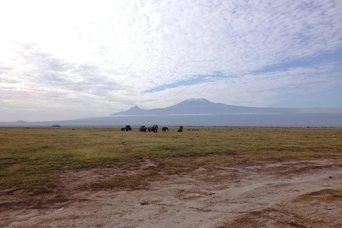 4 Days Amboseli & Tsavo West Wildlife Safari