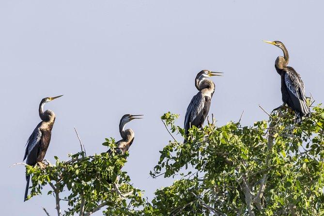 Bundala National Park Safari from Unawatuna