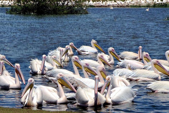Tours To The UNESCO Site Of Tiya Stele & The Rift Valley Bird Lake Of Ziway