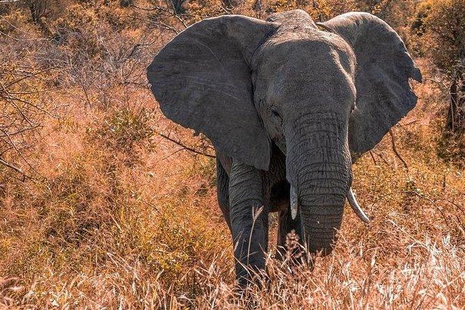 5 Day Amboseli & Tsavo West Safari