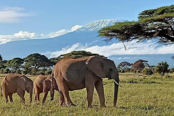 13 Days Photographers safari
