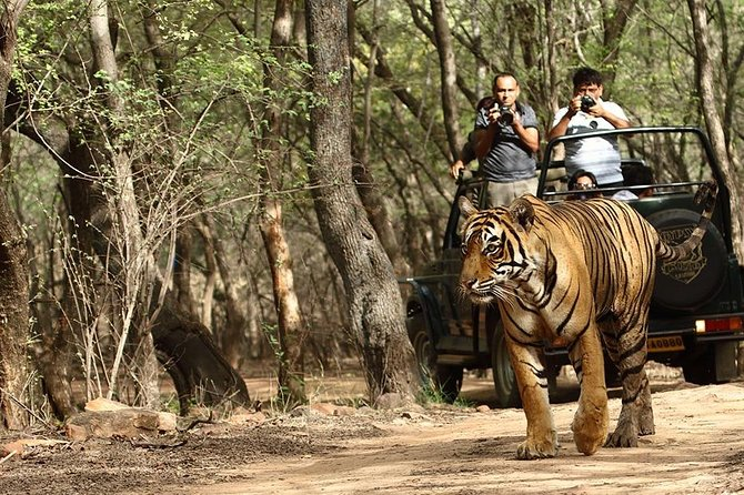 7 Days: Golden Triangle Tour With Ranthambore & Udaipur -Taj Tigers, Lake Cities
