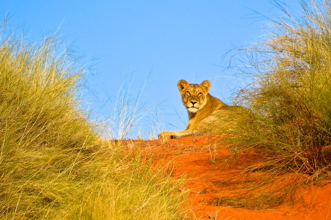 Open Vehicle Safari & Lunch Private Day Tour from Cape Town