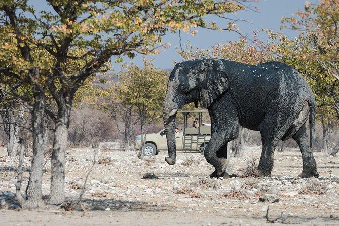 Victoria Falls and Chobe Safari 2 nights package