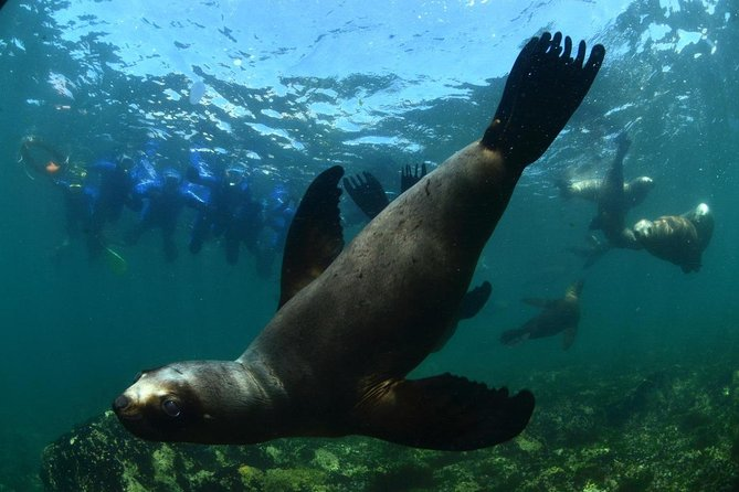 Snorkeling with Sea Lions in Puerto Madryn