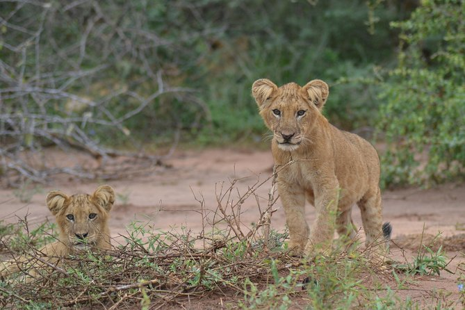 8-Day Exotic Wild Safari Retreat