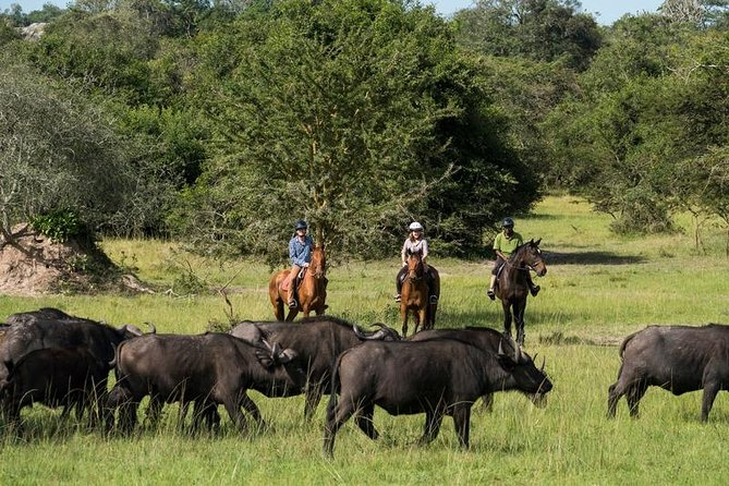 10-Day Uganda Wildlife and Mountain Gorilla Private Safari