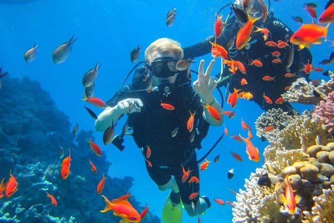 Budget snorkeling trip to giftun island