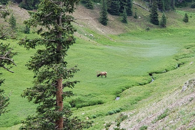 Private and Personalized Three Hour Morning Tour of Rocky Mountain National Park