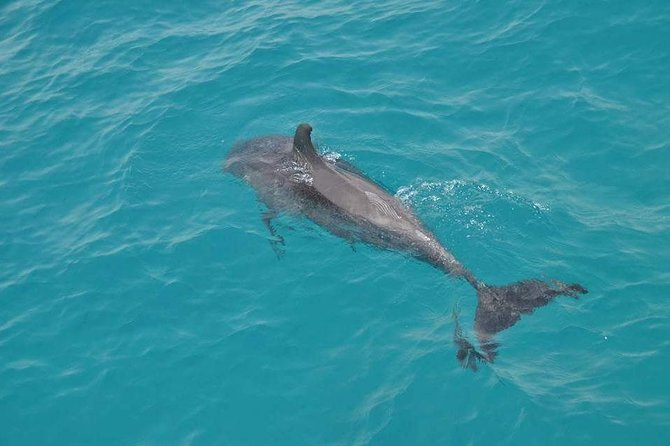 Sea trip (Dolphin house VIP Trip)