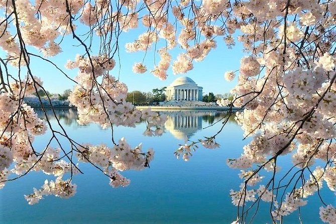 Private Van Tour of Washington DC with Personal Guide up to 11 Guests photo 10