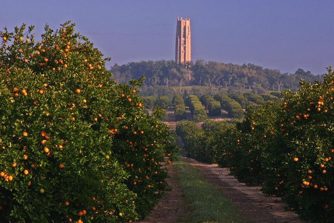 VIP Bok Tower and Citrus Small Group Day Trip from Orlando