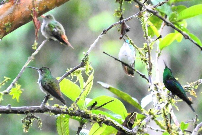 Hummingbirds in Mindo