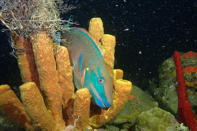 Great Escape Puerto Rico scuba & Snorkeling tours in Rincon PR. Steps Beach Diving over coral reefs