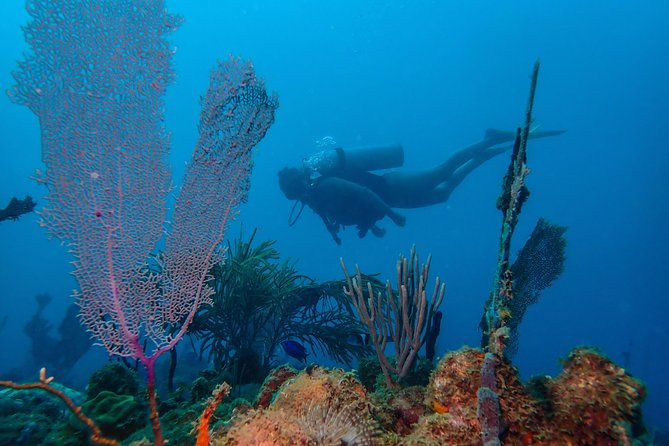 Guided Coral Reef Scuba Tour / 1 tank (Certified Divers Only)