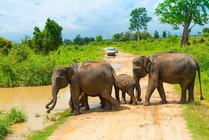 All Inclusive Udawalawa National Park Day Tour from Colombo