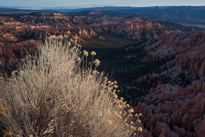 Bryce Canyon Private Tour from Las Vegas