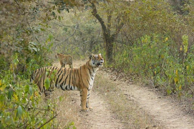 Full-Day Tour to Ranthambore from Jaipur