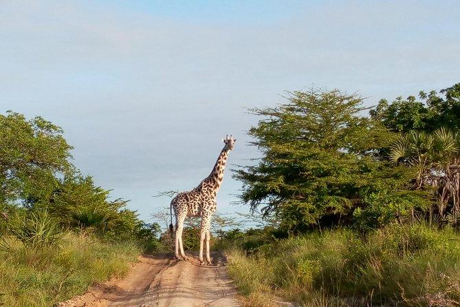 Short Safari from Dar es Salaam to Saadani National Park + Boat Safari - 3 days