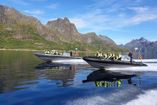 Trollfjord and Sea Eagle Safari Tour from Svolaer