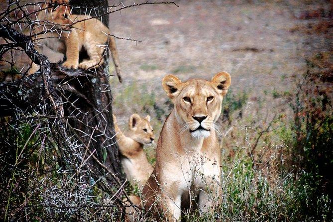 Private Full-Day Ngorongoro Safari Tour in Tanzania
