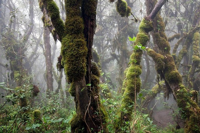 6 Days Kilimanjaro Hiking via Machame Route