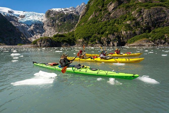 Kenai Fjords National Park Wildlife Cruise & Glacier Kayak Combo Adventure