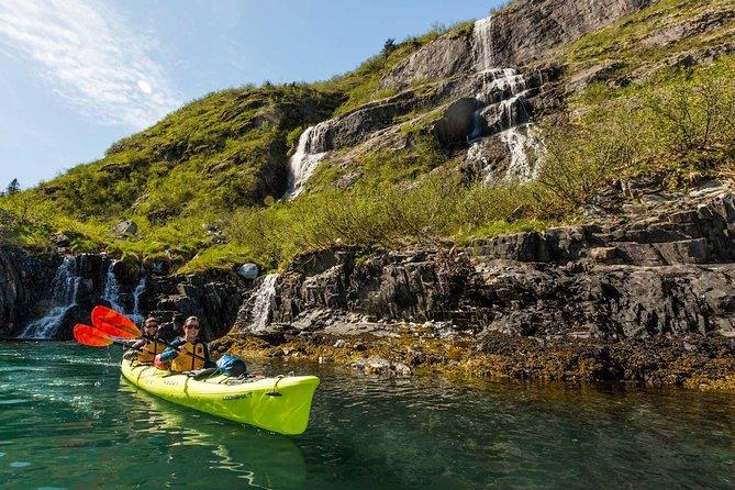 Grand Day Wildlife Cruise & Glacier Kayak Combo