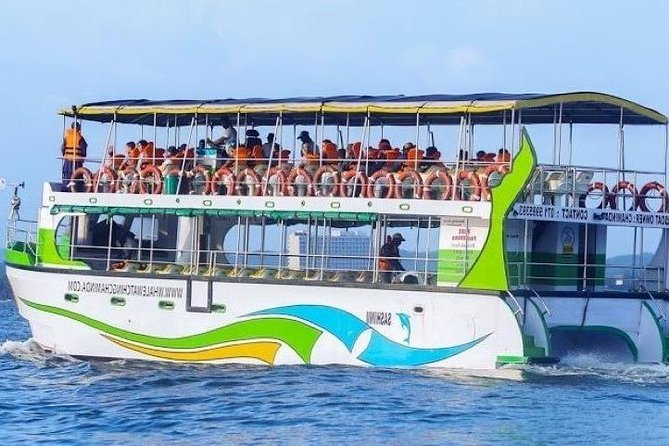 Whales and Dolphins Watching-Luxury Super Grade Cruiser