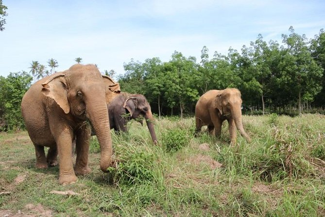 Half Day Ethical Elephants Experience by Samui Elephant Home