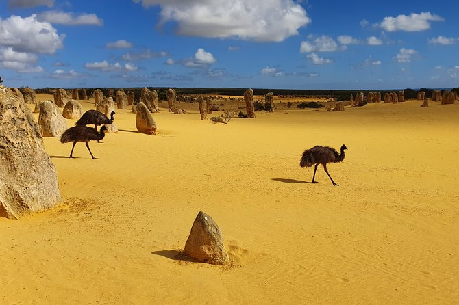 The Pinnacles, Yanchep National Park, Crystal Cave, and Moore River Tour