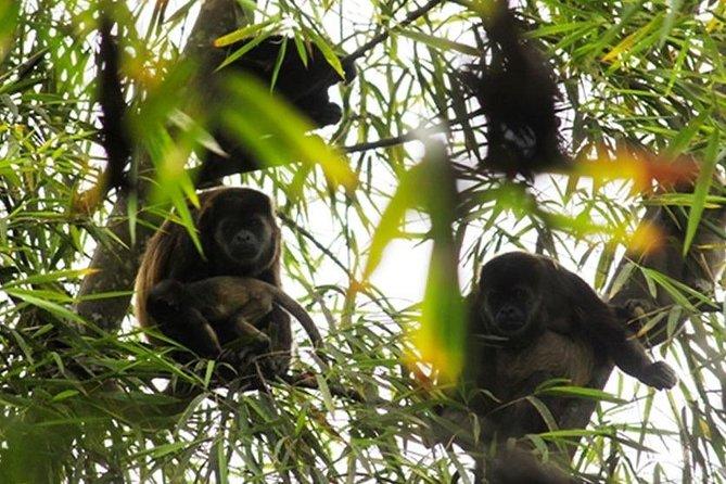 Wet forest tour - Machalilla National Park